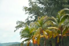 Palm Tree and Green Nature Background Royalty Free Stock Photos
