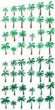 Palm tree green set Stock Photos