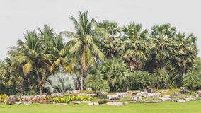 Palm tree group landscape Royalty Free Stock Images