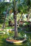 Palm tree grove in the lake in India Stock Photos