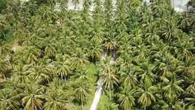 Palm Tree Grove on Seashore. Aerial View stock footage