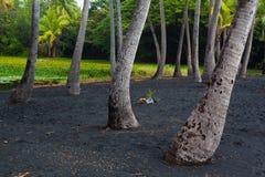 Palm tree grove Royalty Free Stock Photo