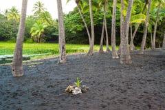 Palm tree grove Royalty Free Stock Photos