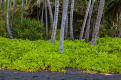 Palm tree grove Stock Image