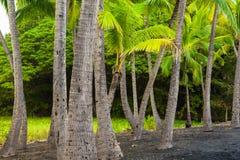 Palm tree grove Stock Photography