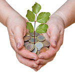 Palm with a tree growing from coins Stock Image