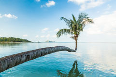 Palm tree growing over water Stock Photo