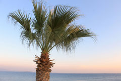 Palm tree growing on the shore of the Aegean landscape Royalty Free Stock Image