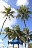 Palm tree in Guam Stock Photos
