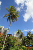 Palm tree in Guam Stock Images