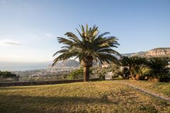 Palm tree with the Gulf of Naples and Vesuvius in the background.  royalty free stock photography