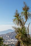 Palm tree with the Gulf of Naples and Vesuvius in the background.  Stock Photos