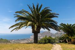 Palm tree with the Gulf of Naples and Vesuvius in the background. Palm tree with the Gulf of Naples and Vesuvius in the background Royalty Free Stock Images