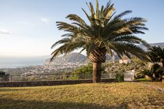 Palm tree with the Gulf of Naples and Vesuvius in the background. Palm tree with the Gulf of Naples and Vesuvius in the background Royalty Free Stock Photography