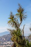 Palm tree with the Gulf of Naples and Vesuvius in the background. Palm tree with the Gulf of Naples and Vesuvius in the background Stock Photography