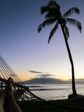 Palm Tree And Hammock On Beach At Sunset Stock Photography