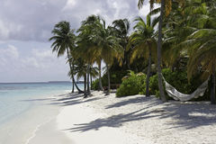 Palm Tree and a Hammock, Maldives Royalty Free Stock Photos