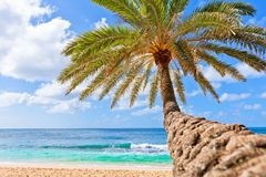 Palm tree hanging over beach. Beautiful palm tree over white sand beach. Summer nature view Royalty Free Stock Photos