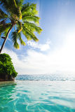 Palm tree hanging over infinity pool Royalty Free Stock Photography