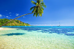 Palm tree hanging over lagoon with blue sky Stock Image