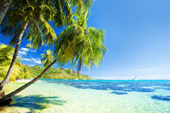 Palm tree hanging over stunning blue lagoon Royalty Free Stock Photography