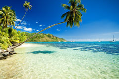 Palm Tree Hanging Over Stunning Lagoon Royalty Free Stock Photos