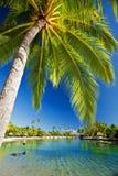 Palm tree hanging over stunning lagoon Royalty Free Stock Photo