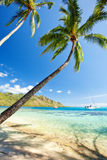 Palm tree hanging over stunning lagoon with sky Royalty Free Stock Photos