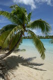 Palm Tree hanging over White Beach Stock Photo