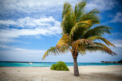 Palm tree in harbor. Lonely palm tree in harbor, malediven Royalty Free Stock Photo