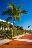 Palm tree at the Harborwalk in Key West, Florida. Stock Photos