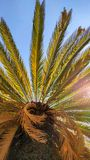 Palm tree wallpaper royalty free stock photography
