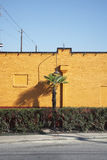 Palm Tree and Hedge Beside a Yellow Wall stock images