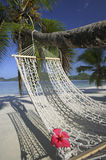 Palm Tree with Hibiscus Flower on Hammock at Mahe`, Seychelles Royalty Free Stock Photography
