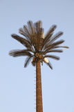 Palm tree with hidden ntennas Royalty Free Stock Photography
