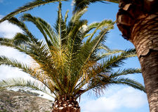 Palm tree and hillside Stock Image