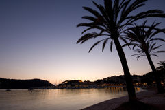 Palm tree holiday destination. Palm trees in beach at sunset on holiday royalty free stock images