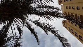 Palm tree from the hotel building against sky. Palm tree from the hotel building against the sky stock video