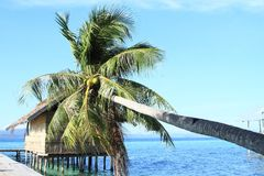 Palm tree and house above sea stock photo