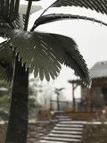 Palm tree ice storm stock photography