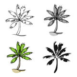 Palm tree icon in cartoon style isolated on white background. Surfing symbol stock vector illustration. Stock Photography