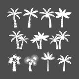 Palm tree icon set, vector eps10 Stock Image