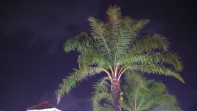 The palm tree is illuminated by light at the dark sky in a tropical location.  stock video footage