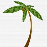 Palm Tree Illustration Royalty Free Stock Images