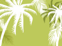 Palm tree illustration Royalty Free Stock Photography