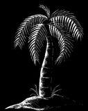Palm Tree Illustration in Black. This is a line drawing Illustration of a palm tree on a black background done in a scratch board type of way stock illustration