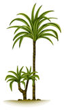 A palm tree Stock Image
