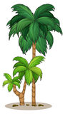 A palm tree Stock Photos