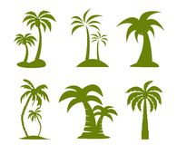 Palm tree image vector illustration