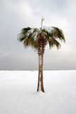 Palm Tree In Jenuary Royalty Free Stock Image